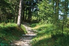 Itinerario Oseacco - Braida (Archivio Comunale)