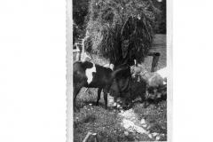 Gisella Valente - Ritorno da Ruscjs 1952 (Archivio Comunale)