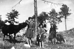 Ragazze al pascolo Plagna 1950 (Archivio Comunale)