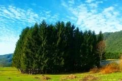 19 – Mancuso Nuncia, Prato: Il boschetto