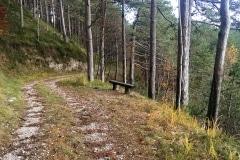 Pinete monte Plagna