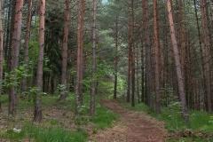 Sentiero nel bosco (Marco Di Lenardo)
